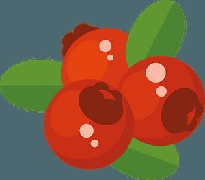Cranberries clipart