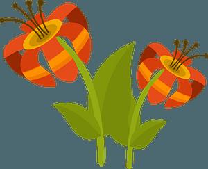 Tropical flower clipart