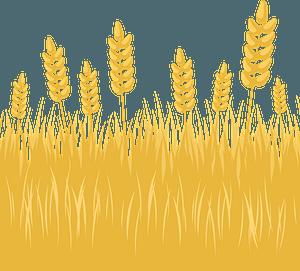 Wheat field clipart