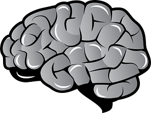 Brain clipart