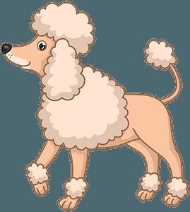 Poodle clipart