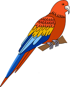 Parrot immagine clipart