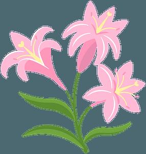 Lilies clipart