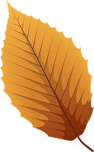 American beech late autumn leaf clipart