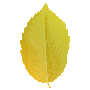 American elm yellow leaf clipart