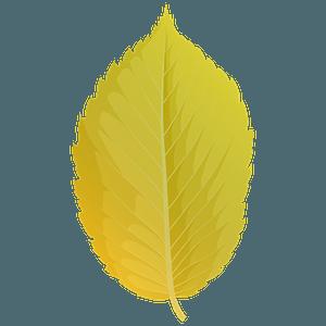 American elm yellow leaf clipart
