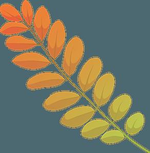 Black locust autumn leaf clipart