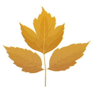 Box elder yellow leaf clipart