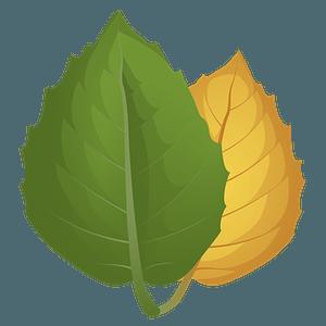 Golden oak summer leaf clipart