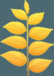 Kentucky coffeetree autumn leaf clipart