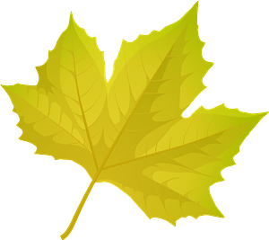London plane tree autumn leaf clipart