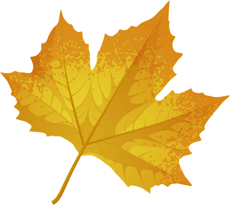 London Plane Tree Late Autumn Leaf Clipart. Free Download