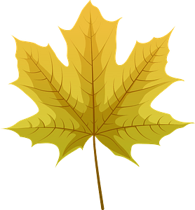 Norway maple yellow leaf clipart