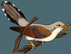 Yellow-billed cuckoo clipart