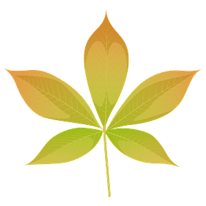 Ohio buckeye yellow leaf clipart
