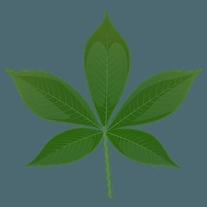 Ohio buckeye green leaf clipart