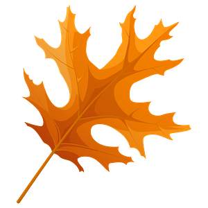 Scarlet oak autumn leaf clipart