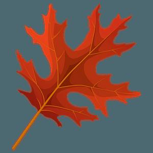 Scarlet oak red leaf clipart