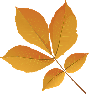 Shagbark hickory tree yellow leaf clipart