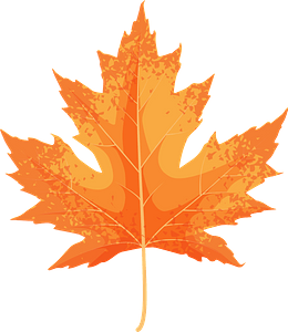 Silver maple yellow leaf clipart