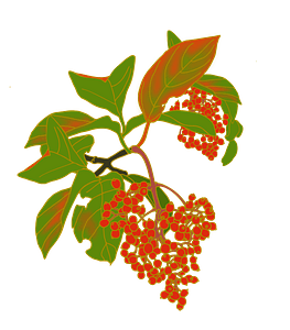 Red berries clipart