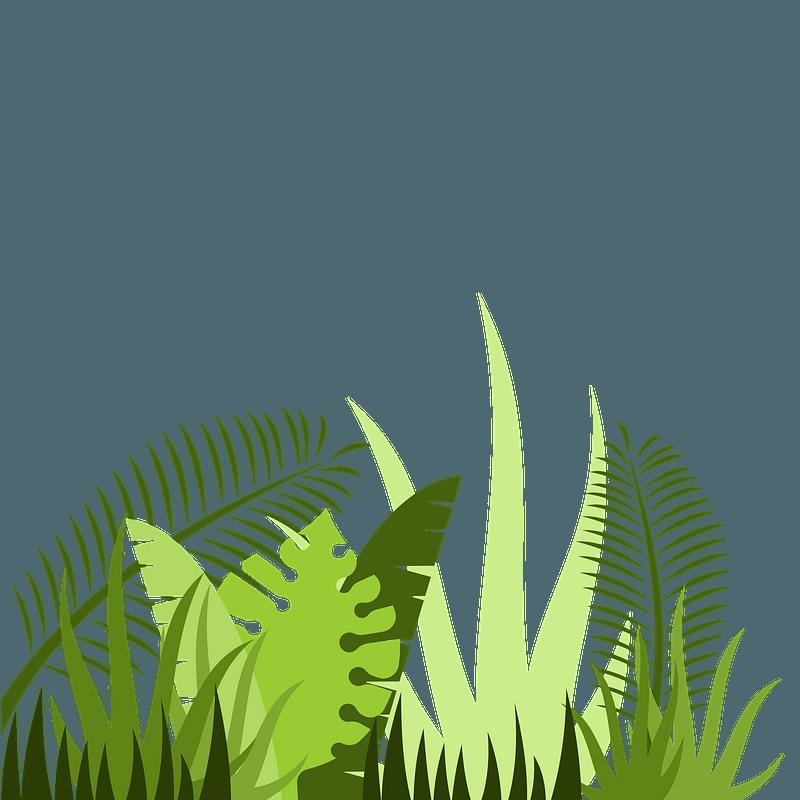 Jungle Leaves Clipart Free Download Transparent Png Creazilla