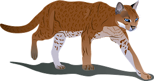 African Golden Cat clipart