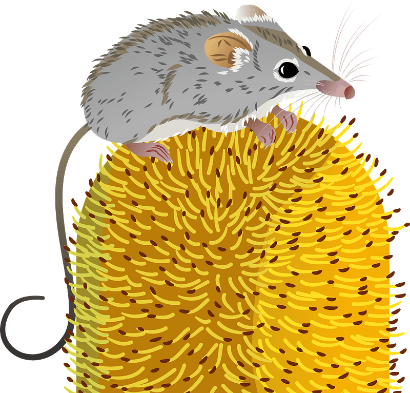 595 Possum Illustrations, Royalty-Free Vector Graphics & Clip Art - iStock