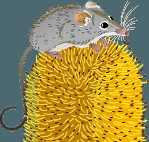 Brushtail Possum clipart. Free download transparent .PNG ...