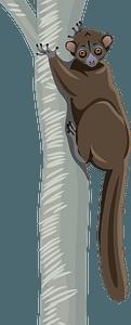 Northern Sportive Lemur clipart