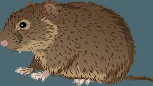 Prairie vole clipart