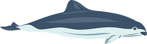 Spectacled porpoise clipart