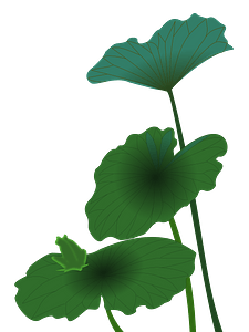 Lotus leaves clipart