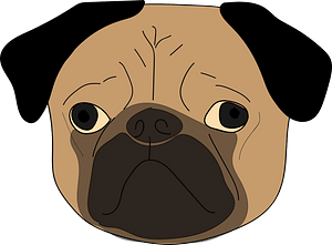 Pug head clipart