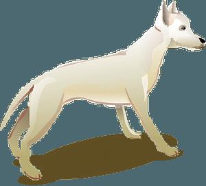 White Dog clipart