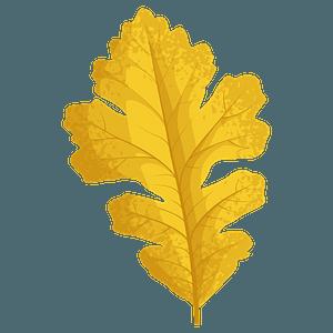 Bur oak late autumn leaf clipart
