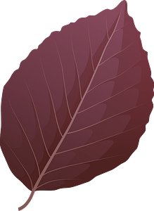 Copper beech spring leaf clipart