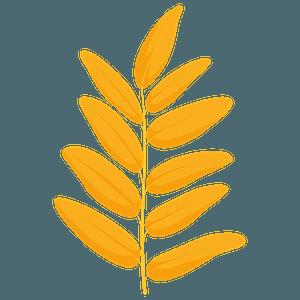 Honey locust yellow leaf clipart