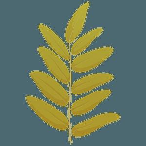 Honey locust summer leaf clipart
