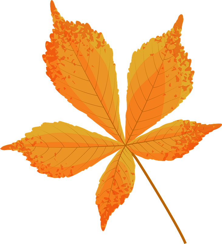 Horse chestnut late autumn leaf clipart. Free download ...