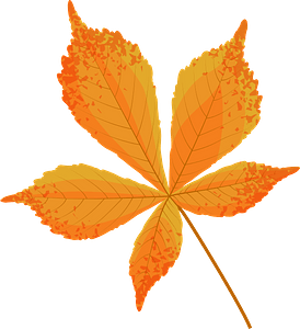 Horse chestnut late autumn leaf clipart
