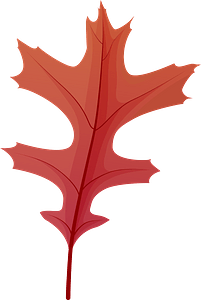 Pin oak late autumn leaf clipart