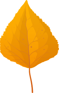 Quaking aspen late autumn leaf clipart