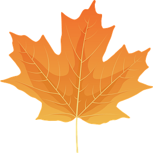 Sugar maple yellow leaf clipart