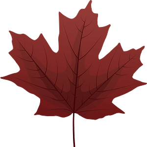 Sugar maple red leaf clipart