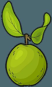 Guava clipart