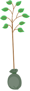 Tree seedling clipart
