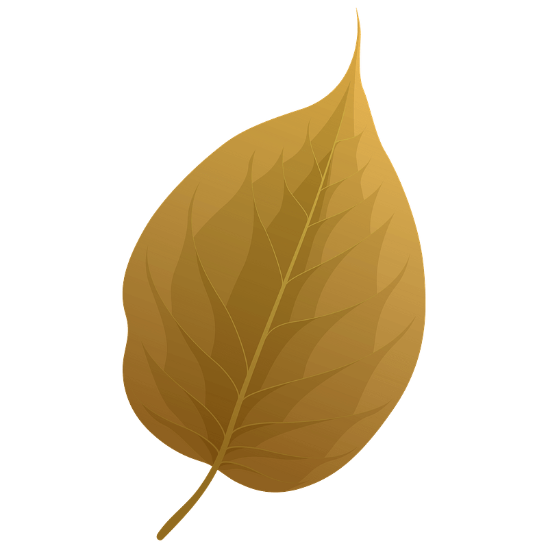 Osage orange autumn leaf clipart