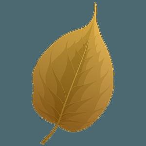 Osage orange autumn leaf clipart