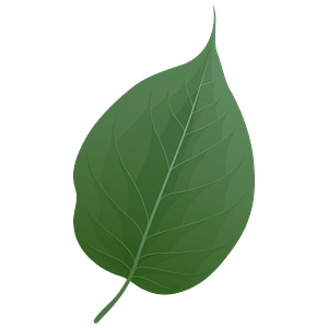 Osage orange spring leaf clipart